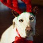 kerstdecoratie-huisdier